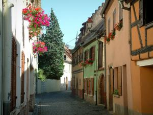 Molsheim - Narrow paved street, houses with colourful facades and windows decorated with flowers