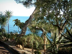 Monaco and Monte Carlo - Exotic plants, cactus, trees and sea in background