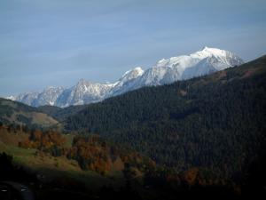 Mont-Blanc - Trees in autumn, spruce forest and the Mont Blanc mountain range