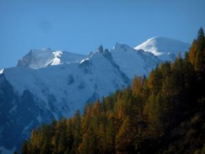 Mont-Blanc - From the Col de Montets pass, view of trees in autumn and the Mont Blanc mountain range