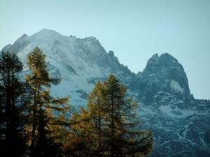 Mont-Blanc - Trees and the Mont Blanc mountain range