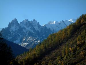 Mont-Blanc - From the Col de Montets pass, view of a forest in autumn and the Mont Blanc mountain range