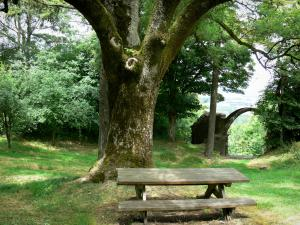 Montenoison Butte - Picnic table at the foot of a tree, and remains of the castle in the background