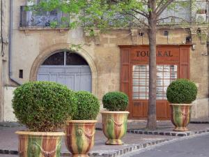 Montpellier - Shrubs in jars, tree and facade of a house