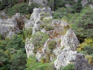 Montpellier-le-Vieux blockfield - Dolomitic rocks surrounded by greenery
