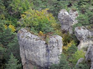 Montpellier-le-Vieux blockfield - Dolomitic rocks surrounded by trees