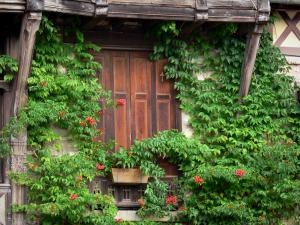 Moret-sur-Loing - Window of a wooden framed house surrounded by creepers