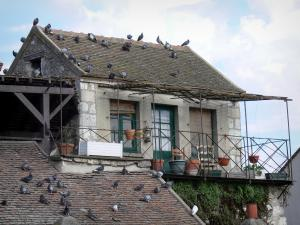 Moret-sur-Loing - Facade of a house in the medieval town and pigeons on the roofs