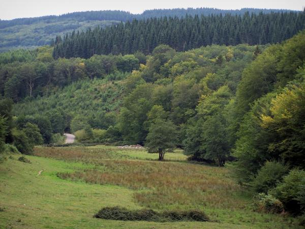 Morvan - Morvan Regional Nature Park: prairie, trees and forest