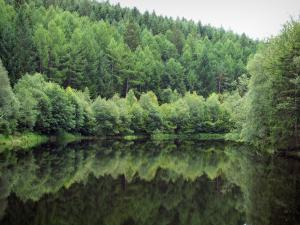 Morvan - Morvan Regional Nature Park: expanse of water surrounded by trees (forest)