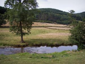 Morvan - Morvan Regional Nature Park: river lined with meadows, trees and forest in background