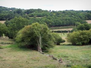 Morvan - Morvan Regional Nature Park: meadows and trees