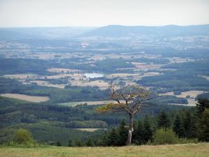 Mount Beuvray - Morvan Regional Nature Park: view (panorama) on the landscapes of Morvan from the top of the mount Beuvray
