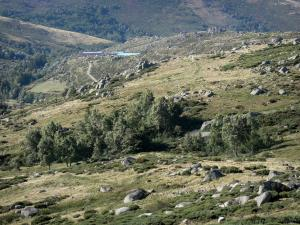 Mount Lozère - Cévennes National Park: granite blockfields on the slopes of Mount Lozère