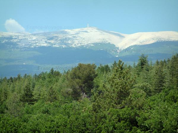 Mount Ventoux - Forest and mount Ventoux (limestone mountain)