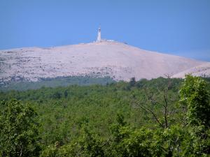 Mount Ventoux - Forest and mount Ventoux (limestone mountain), peak covered with white stones