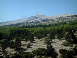 Mount Ventoux - Mount Ventoux (limestone mountain) with trees, vegetation and peak