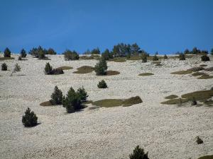 Mount Ventoux - Limestones and plants