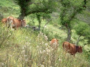 Mountain fauna - Wild flowers, cows and trees
