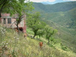 Mountain fauna - Wild flowers, cows, small pink house, trees and mountains