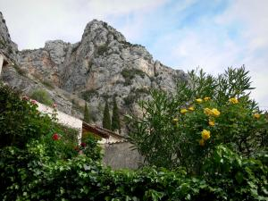 Moustiers-Sainte-Marie - Rosebushes (roses), houses and cliff
