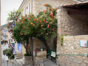 Moustiers-Sainte-Marie - House with climbing roses (rosebushes)