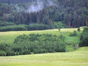 Mouthe valley - Meadows, spruces (trees), forest; in the Upper Jura Regional Nature Park