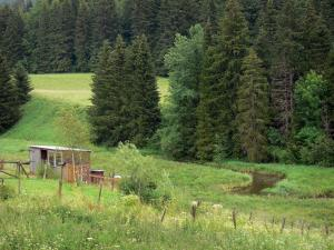 Mouthe valley - Hut, wild flowers, vegetation, river and spruces (trees); in the Upper Jura Regional Nature Park