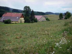 Mouthe valley - Meadow with wild flowers, houses, trees and forest in background; in the Upper Jura Regional Nature Park