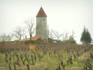 Nantes vineyards - Vineyards, tower, trees and cloudy sky