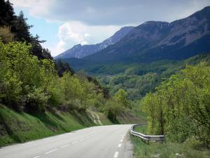 Napoléon road - Napoleon road lined with trees and view of the forest and mountains