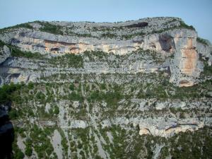 Nesque gorges - Steep cliff (rock face) and trees of the wild canyon