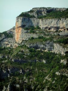 Nesque gorges - Trees and steep cliff (rock face) of the wild canyon