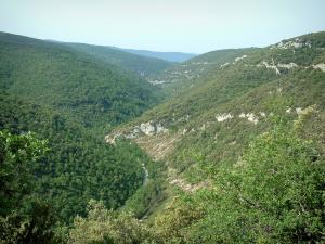Nesque gorges - Hills covered with forests