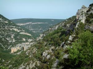 Nesque gorges - Trees, rock and cliffs of the canyon