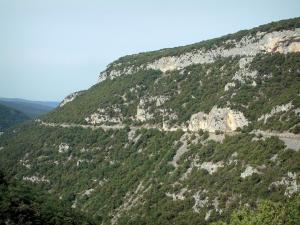 Nesque gorges - Cliff, rock and trees