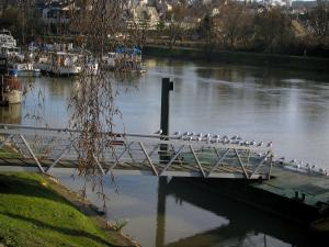 Neuilly-sur-Marne - Gulls on pontoons, the River Marne with barges, trees and houses in background