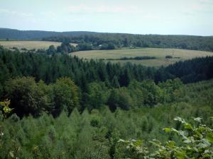 Noire (Black) mountain - Trees, meadows and forests (Upper Languedoc Regional Nature Park)