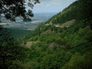 Noire (Black) mountain - Branches in foreground and mountain covered with trees (forest) with view of the valley (Upper Languedoc Regional Nature Park)