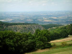 Noire (Black) mountain - Trees, forest and valley in background (Upper Languedoc Regional Nature Park)