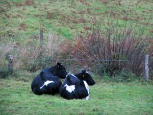 Norman Seine River Meanders Regional Nature Park - Cows in a meadow