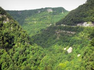 Nouailles gorges - Rock faces and forest (trees)