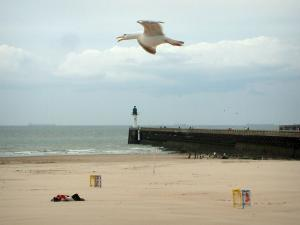 Opal Coast landscapes - Gull flying, sandy beach, pier and North Sea in Calais