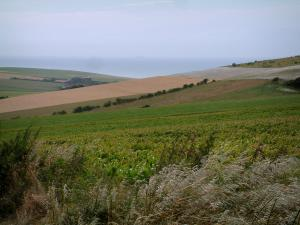 Opal Coast landscapes - Hill covered with fields and sea in background