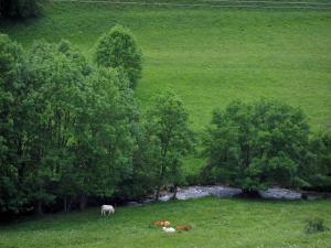 Oueil valley - Cows in a prairie, river and trees along the water, in the Pyrenees