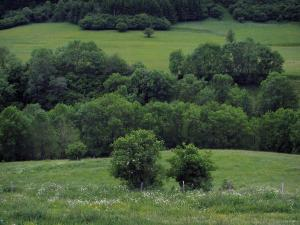 Oueil valley - Meadows and trees, in the Pyrenees