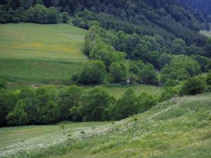 Oueil valley - Meadows, trees and forest, in the Pyrenees