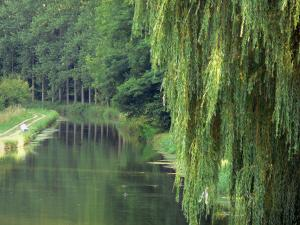 Ourcq canal - Weeping willow in the foreground, canal, fisherman, towpath, and trees along the water
