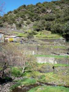 Paesaggi dell 39 aude 40 immagini di qualit in alta for Giardini terrazzati immagini