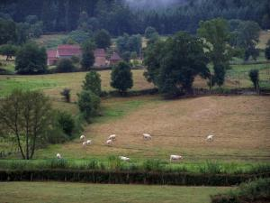 Paesaggi della borgogna del sud 25 immagini di qualit for Piani di fattoria del sud